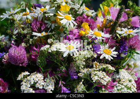 Extreme close-up of summer flowers - Stock Photo