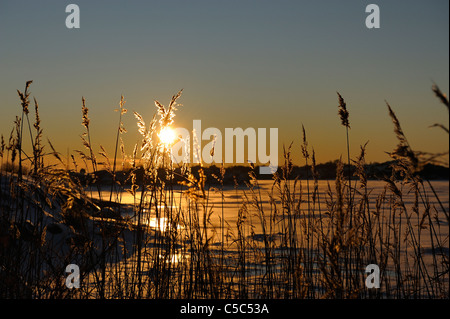 Sunset over peaceful sea with reeds in the foreground - Stock Photo
