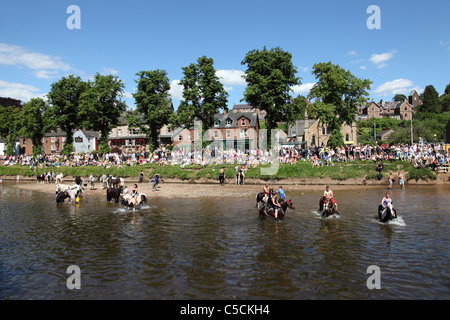Swimming horses in the River Eden at the Appleby Horse Fair, Appleby-In-Westmorland, Cumbria, England, U.K. - Stock Photo