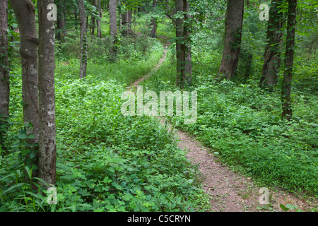 Pathway through forest in Cades Cove Village in the Great Smoky Mountain National Park on the Tennessee side of - Stock Photo