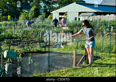 Woman watering her plot in a community garden. - Stock Photo