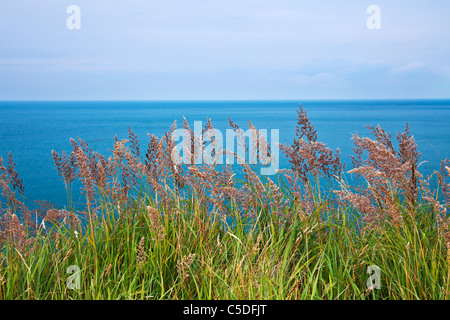 A simple image of coastal grasses with the blue sea and horizon beyond. - Stock Photo