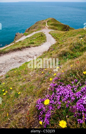 View of Baggy Point a headland near Croyde, North Devon, England, UK with Lundy Island in the distance. - Stock Photo