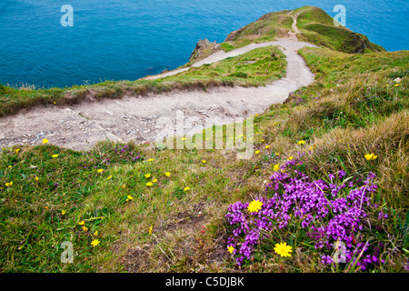 View of Baggy Point a headland near Croyde, North Devon, England, UK - Stock Photo
