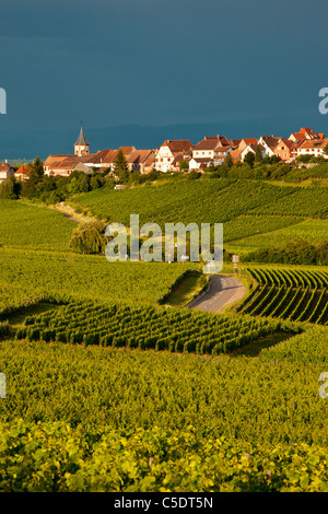 Vineyards below the village of Zellenberg, along the Wine Route, Alsace Haut-Rhin France - Stock Photo