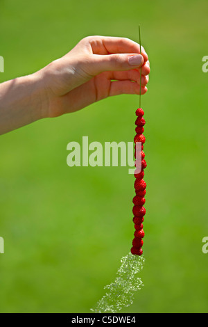 Close-up of a hand holding straw with several wild strawberries against blurred green background - Stock Photo