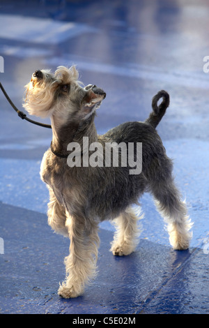 Obedient dog looking up - Stock Photo