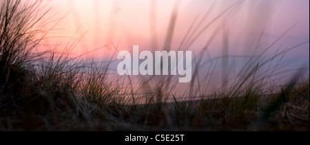 Close-up of long grasses on sandy beach with peaceful sea in the background at dusk - Stock Photo