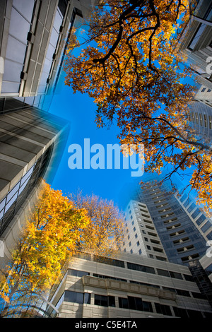 Low angle view of buildings and autumnal trees against clear blue sky - Stock Photo