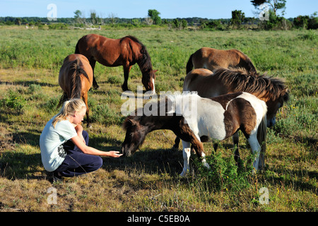 Side view of a girl feeding horses on the landscape - Stock Photo