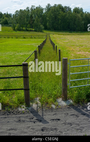 Path overgrown with grass leading towards a patch of forest in between two fences - Stock Photo