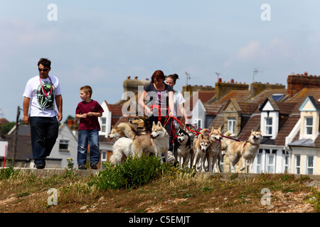 Family walking dogs along street in housing estate, St Leonards on Sea, East Sussex, England - Stock Photo