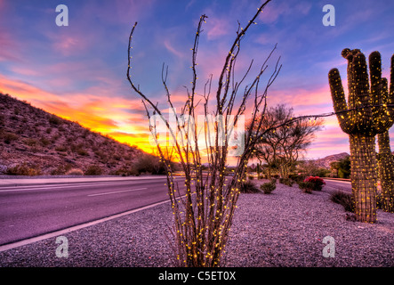 These huge Saguaro Cactus have been covered in Christmas lights for the Christmas season in Phoenix, AZ - Stock Photo