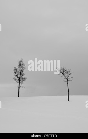 Two bare trees in a snow covered field - Stock Photo