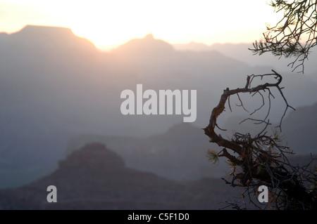 Sunrise illuminates pinion trees on the South Rim of the Grand Canyon. - Stock Photo