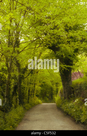 Path in the woods Marple UK - Stock Photo