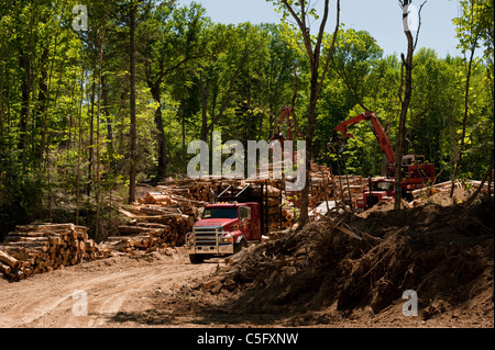 Logging trucks are loaded with cut hardwood logs, Algoma, Ontario. - Stock Photo