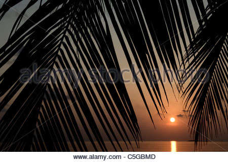 Sunset through Palm fronds Maldives - Stock Photo