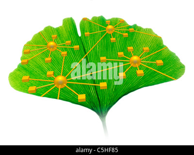 Ginkgo and network diagram - Stock Photo