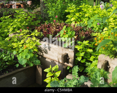 lettuces and vegetables in raised beds - Stock Photo