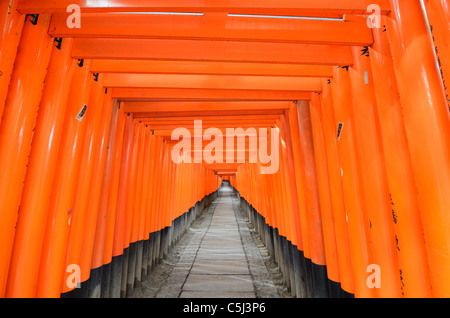 The Tori gates at Fushimi Inari Shrine in Kyoto, Japan. - Stock Photo