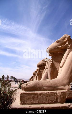 Raw of rams - Karnak -Luxor