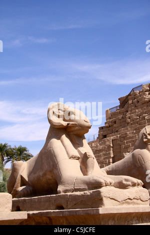 Rams at the Karnak