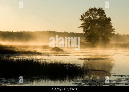 Beaver lodge shrouded in fog Crex Meadows Wildlife Management Area Burnett County Wisconsin Early October - Stock Photo