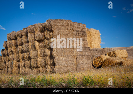 Hay bales near the town of Palouse in the agricultural area of The Palouse in eastern Washington state. - Stock Photo