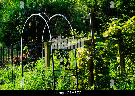 An archway leading into a trellis covered in grape vines. - Stock Photo