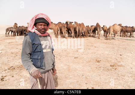 Portrait of a migrant Sudanese camel herder tending a herd of domesticated Arabian camels in the al-Hazim region - Stock Photo