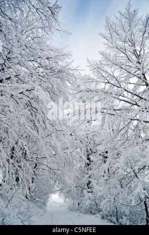 Winter road running between the frozen trees - Stock Photo