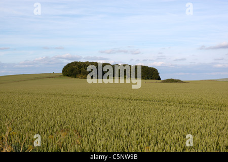 Hill Top View from the Roundway near Devizes Wiltshire - Stock Photo