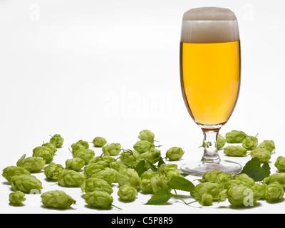 Ein Glas mit Bier, dabei liegt Hopfen | a glass of beer, beside is hop - Stock Photo