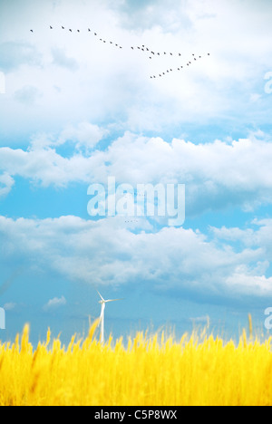 Ukrainian summer landscape with solitary wind turbine - Stock Photo
