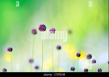 violet flowers on field - Stock Photo