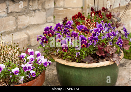 Mixed garden containers including Viola F1 'Antique Shades', 'Sorbet Blueberry Cream' and 'Rose Blotch' - Stock Photo