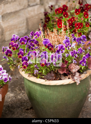Mixed garden containers including Viola F1 'Antique Shades' and 'Rose Blotch' - Stock Photo