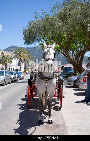 Mijas, in Andalusian Spain, horse drawn carriage with white horse waiting for tourists - Stock Photo