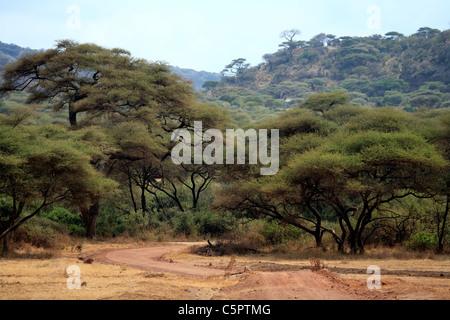 Lake Manyara National Park, Tanzania - Stock Photo