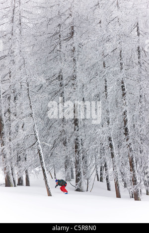 A snowboarder riding through a forest emerges from the snow covered trees. - Stock Photo