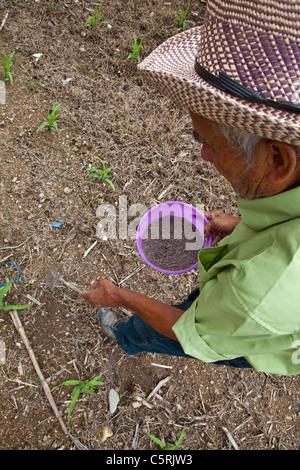 Elderly man fertilizing corn, Canton La Junta, Comalapa, Chalatenango, El Salvador - Stock Photo