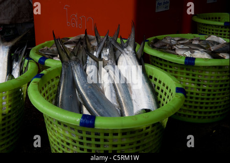 salt water fish in a small cannery in Thailand - Stock Photo