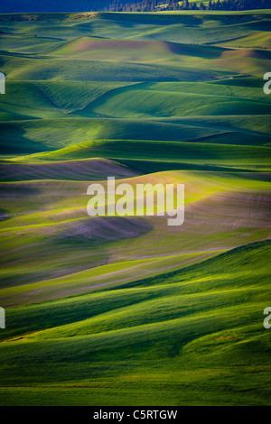 Rolling Palouse landscape as seen from Steptoe Butte state park in Washington state, USA - Stock Photo