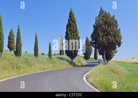 Italy, Tuscany, Province of Siena, Val d'Orcia, View of road lined with cypress trees - Stock Photo