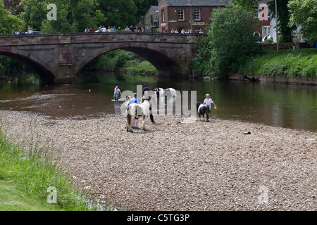 Gypsies washing horses in the River Eden at Appleby Horse Fair, Appleby in Westmoreland. - Stock Photo