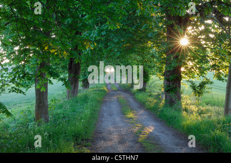 Germany, Mecklenburg-Western Pomerania, Alley, Chestnut tree (Aesculus hippocastanum) lined field path - Stock Photo