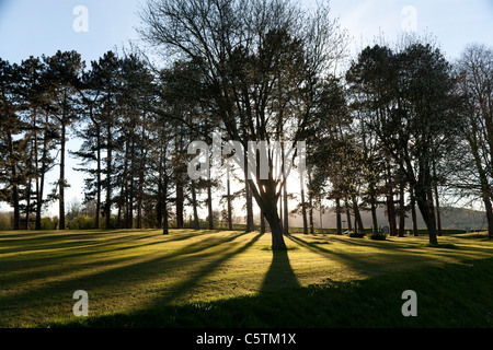 The late evening sunshine casting long shadows of silhouetted trees across cut grass - Stock Photo