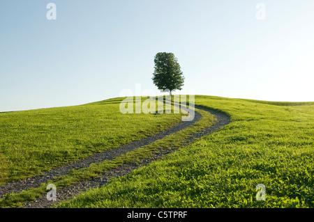 Germany, Bavaria, Allgäu, Single tree next to farm track - Stock Photo