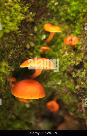 Bright Orange Fungi Growing On Trunk Of Rainforest
